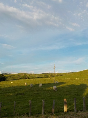 View of wind mills, outside of Tilaran